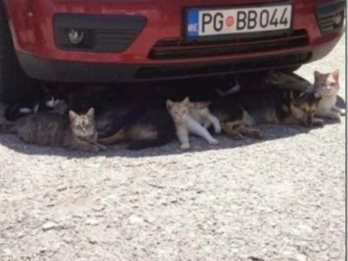 Chưa bao giờ chó mèo hòa thuận đến thế.