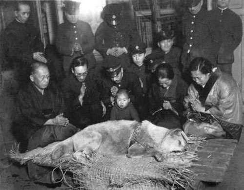 Hachiko- chú chó đợi chủ 9 năm ròng trước khi được chôn cất vào năm 1935. Hachiko là chú chó giống Akita được nuôi bởi một giáo sư đại học ở Nhật. Đây là chú chó nổi tiếng với lòng trung thành khiến người khác phải kinh ngạc. Mỗi ngày, Hachiko thường tiễn giáo sư đi làm buổi sáng và ngồi chờ trước cổng nhà ga xe lửa buổi chiều để cùng ông về nhà. Rồi một ngày, giáo sư qua đời khi đang giảng dạy ở trường và không bao giờ về bằng xe lửa nữa. Nhưng ngày nắng cũng như ngày mưa, Hachiko vẫn đến ngồi đợi chủ về, đúng giờ đó, đúng chỗ đó trong suốt 9 năm ròng cho đến khi chết.