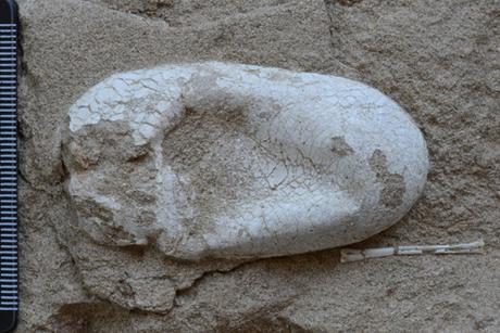 http://m.f29.img.vnecdn.net/2014/06/11/pterosaur-egg-jpeg-1581-1402456156_m_460x0.jpg