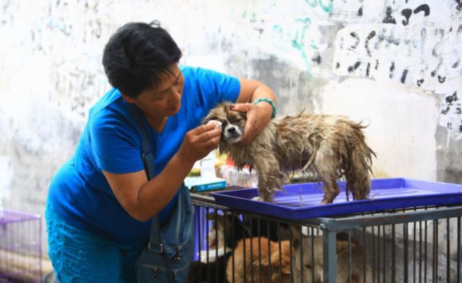 Một phụ nữ đang chăm sóc chó sau khi giải cứu nó từ một tay buôn.