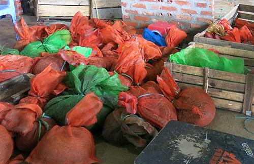Thương lái Trung Quốc cùng 3,5 tạ tê tê bị bắt giữ