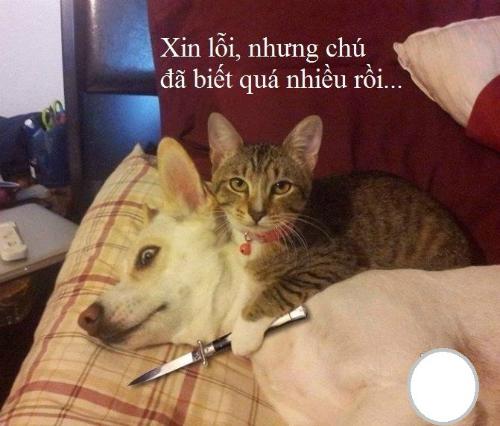 Nhân chứng nhiều vụ ăn vụng của Mèo.