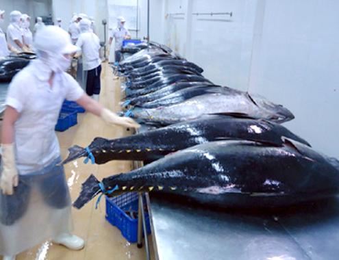Nhật Bản giúp ngư dân lập 30 đội tàu composite