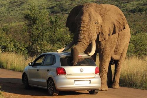 elephant-1-4282-1407382764.jpg
