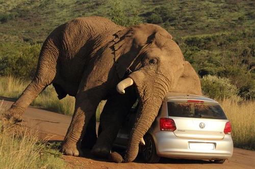 elephant-2-5070-1407382764.jpg