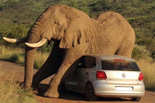 elephant-3-1775-1407382764.jpg
