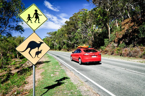 Kangaroo-crossing-sign-on-Nort-1118-6749