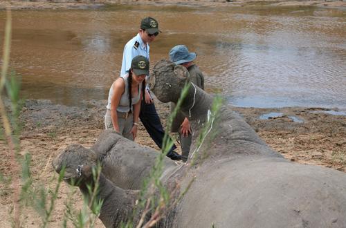 Ca sĩ Hồng Nhung sốc khi tận mắt thấy tê giác bị giết