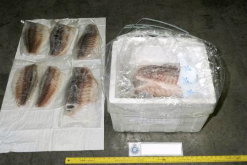 Ma túy được giấu dưới lô cá phi lê đông lạnh