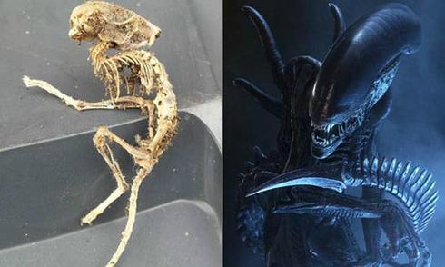 Bộ xương loài gặm nhấm 'giống người ngoài hành tinh'