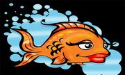 Chuyện tình của cá và nước