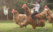 Khi động vật trở nên lạ lẫm nhờ photoshop