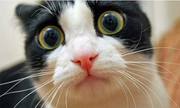 Khi động vật ngạc nhiên