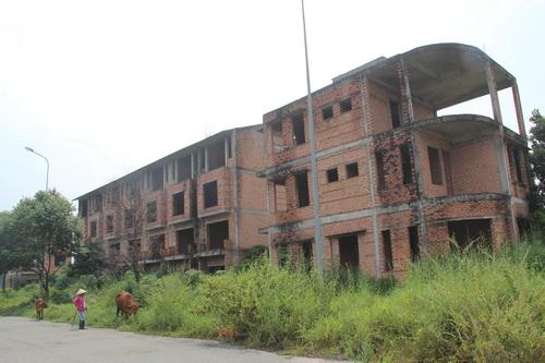 Thành phố mới bỏ hoang với hàng chục căn nhà xây dở hơn 6 năm nay giờ là nơi chăn bò của người dân địa phương lân cận. Ảnh: Hoàng Trường