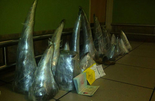 41 kg sừng tê cảnh sát Nam Phi tịch thu được từ hai người Việt tại sân bayJohannesburg. Ảnh: AFP
