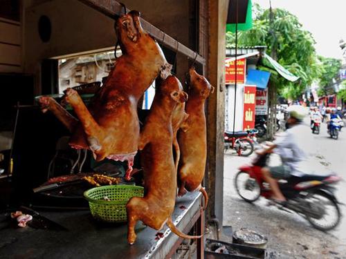 Báo Mỹ mô tả thủ đoạn trộm chó ở Việt Nam