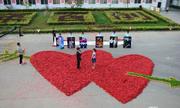 Những màn cầu hôn gây sửng sốt cộng đồng