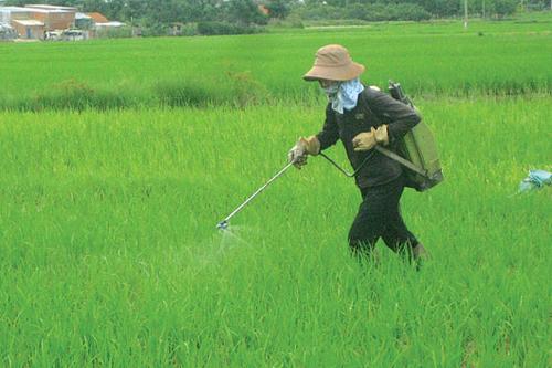 ông dân nên hết sức cẩn trọng khi phun thuốc bảo vệ thực vật.