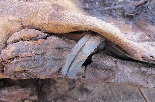 million-mummy-cemetery-1-JPG-2121-141881