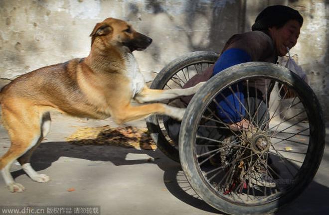 Cún của Lao Ma