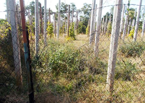 Lỗ lưới B40 phía sau vườn nhà nạn nhân bị cắt, nghi là nơi đột nhập của kẻ sát nhân. Ảnh: Thùy Dung