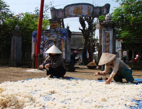 Ngư dân Quảng Ngãi trúng đậm rau câu chân vịt ở Hoàng Sa