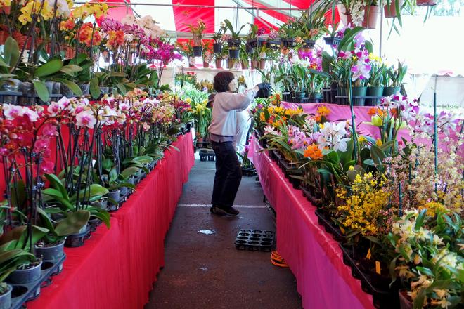"""<p class=""""Normal"""">  Chợ hoa Tết Ất Mùi kéo dài từ ngày 30/1 đến 18/2 với rất nhiều gian hàng bày bán đủ loại hoa, cây cảnh và đồ trang trí.</p>"""