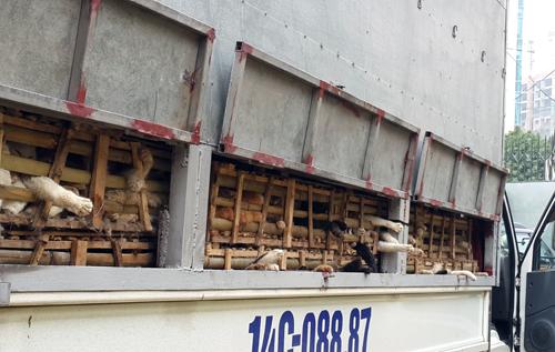 Hơn 2,5 tấn mèo từ Trung Quốc về Hà Nội bị nghiền chết
