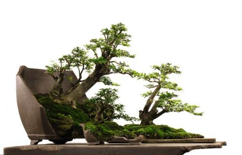 bonsai-tieucanh-dep-2058-1424837305.png