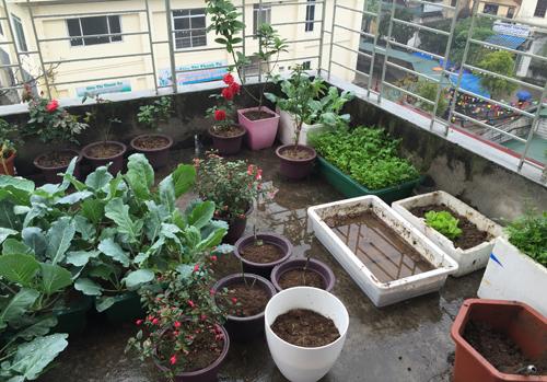 image 1426168546 7947 1426230867 Vườn cây cảnh rau sạch xanh tươi trên tầng thượng