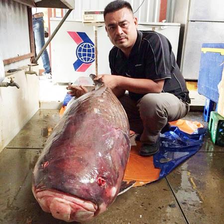 Con cá hô do ngư dân Campuchia bắt được đã chuyển về TP HCM sáng 19/3. Ảnh: H.D