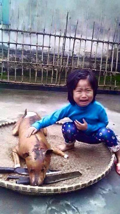 be gai 7965 1426907473 Bé gái Việt khóc bên chú chó bị giết thịt khiến cộng đồng rơi lệ