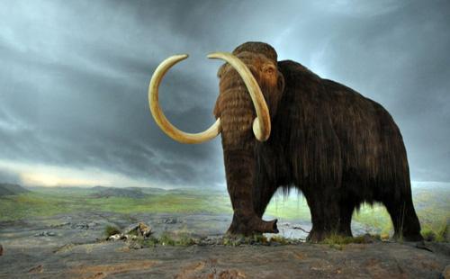 woolly-mammoth-1192-1427165532.jpg