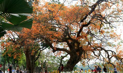 Những cây nên trồng ở đô thị Việt Nam