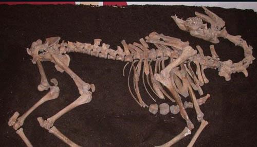 150402113350-war-camel-skeleto-3791-8013