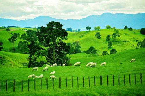 Đồng cỏ và thảo nguyên xanh.