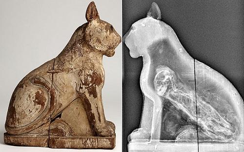 Animal-Mummies-spl-3299677b-1439-1431414