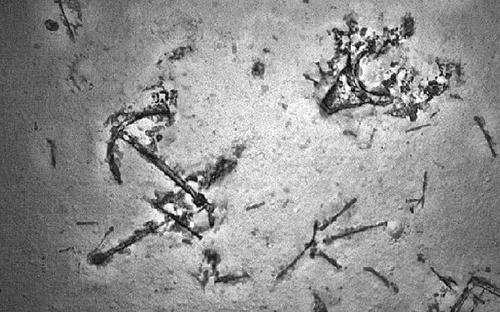 Xác tàu không rõ nguồn gốc được tìm thấy ở ngoài khơi phía tây Australia. Ảnh: AFP