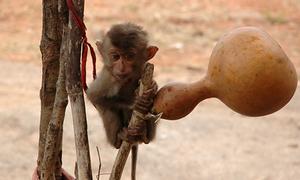Số phận của những con khỉ đằng sau các bức ảnh