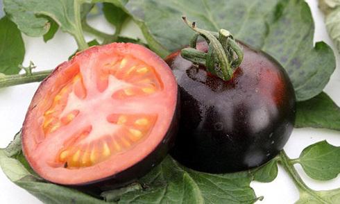 Cà chua đen giàu chất chống oxy hóa