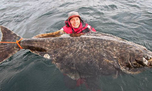 Cá bơn khổng lồ 30 tuổi mắc câu ở Na Uy
