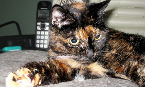 ht-tiffany-two-oldest-cat-jc-1-4644-7621