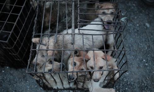 10.000 con chó bị giết trong lễ hội ở Trung Quốc