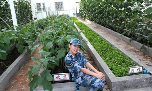 Trung Quốc công bố ảnh trồng rau, nuôi gia súc trên đá Chữ Thập