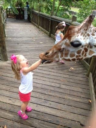 Bé gái khóc thét khi bị hươu cao cổ cắn vào tay.