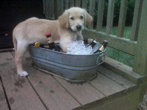 dog-ice-bucket-5775-1435896170.jpg