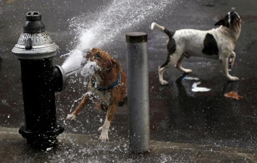 fire-hydrane-dogs-reuters.jpg