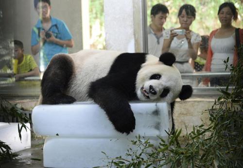 panda-reuters.jpg