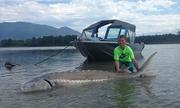 Cậu bé 9 tuổi chinh phục cá tầm trắng khổng lồ