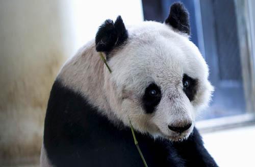 panda-5525-1436784129.jpg